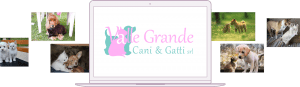 Collage Valle Grande Cani e Gatti